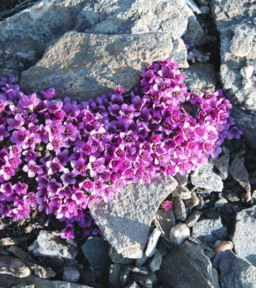 Purple flowers and stones