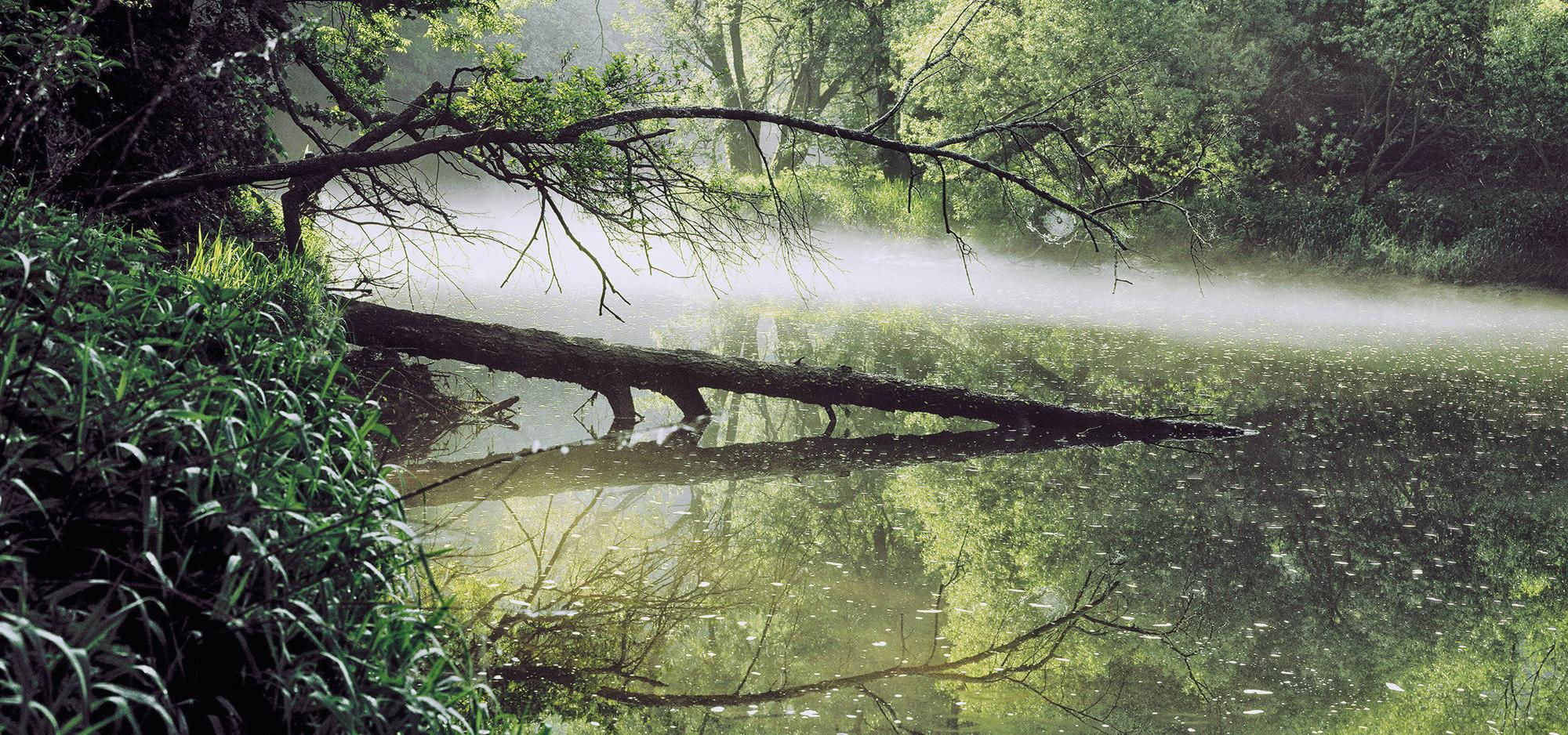 A river with trees in the fog