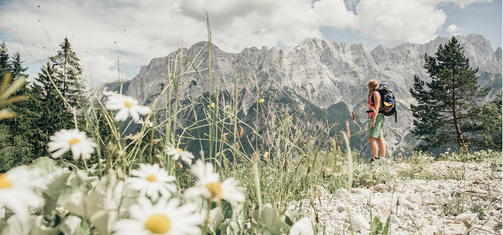 A women with a backpack stands in a meadow with flowers and stones and is looks at the mountains
