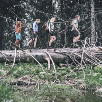 4 people walking over a lying  tree
